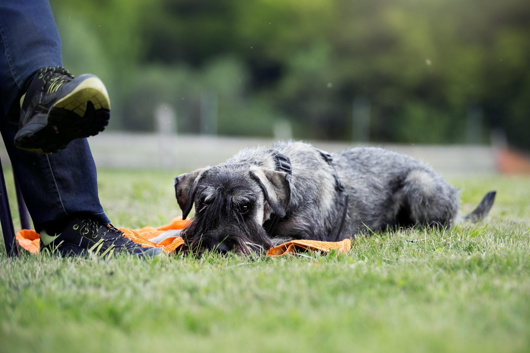 Hundekurs Alltagstraining